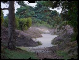 Horstmannsbos-omgeving-1